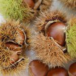 世界初、和栗から「植物ヒト型セラミド」の開発に成功