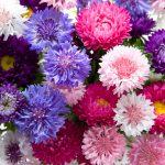 国産食用花ナスタチウムの花弁から 「I型コラーゲン産生促進作用」 「I型コラーゲン分解酵素活性阻害作用」を有する エキスを開発